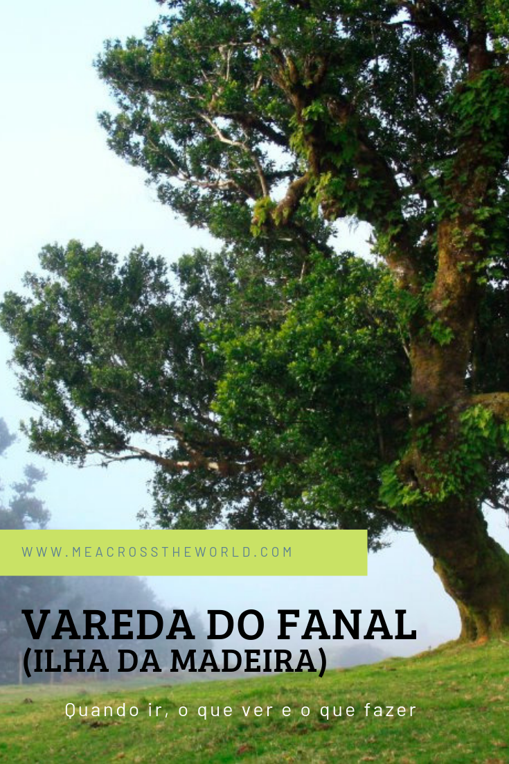 Vareda da Fanal (Ilha da Madeira)
