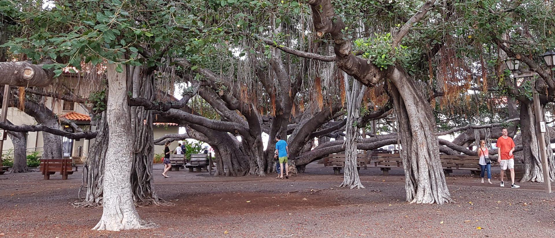 Lahaina (Maui)