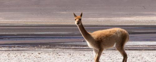 #Dia 104 – San Pedro de Atacama [Salar de Tara]