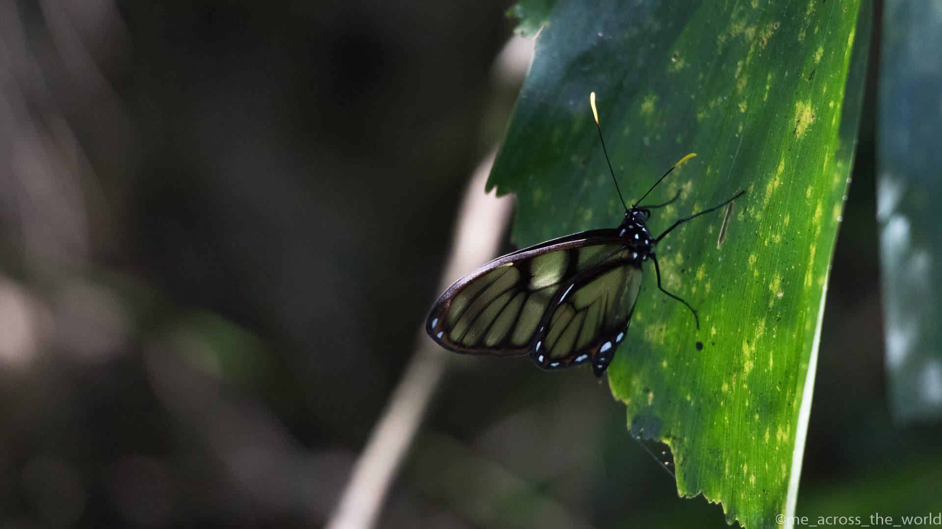 #Dia 114 – Samaipata e o Parque Nacional Amboro