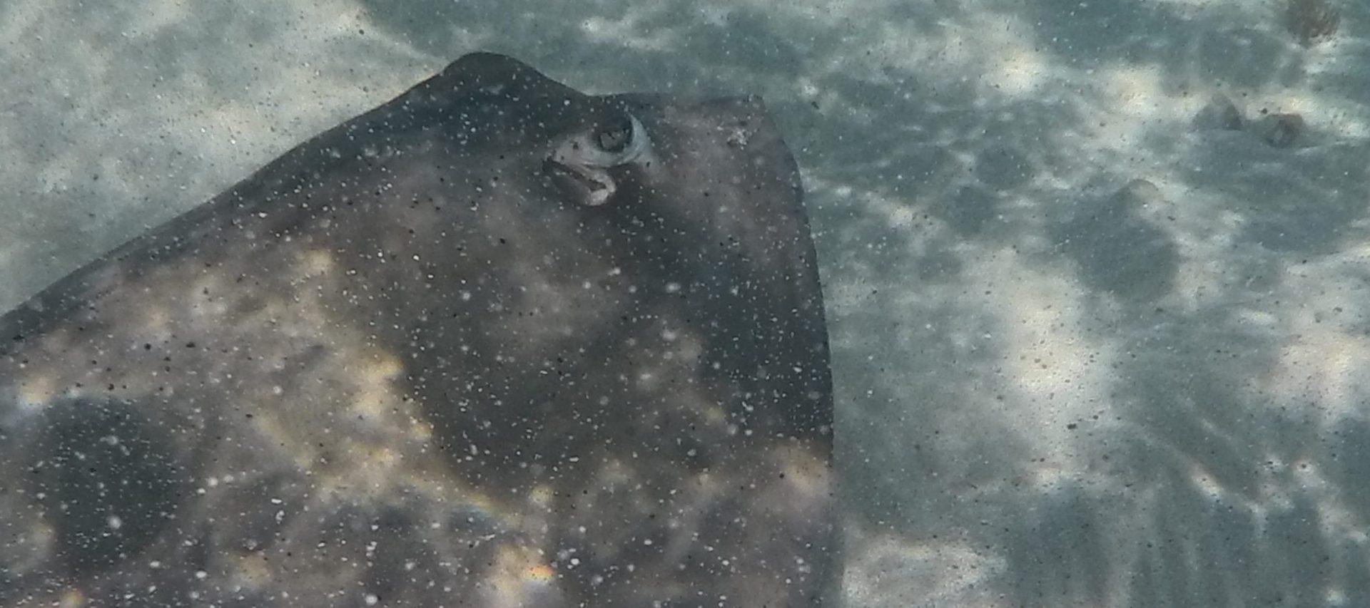 Nadar com as raias (Grand Turk)