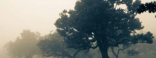 Há magia na vareda do Fanal (Madeira)