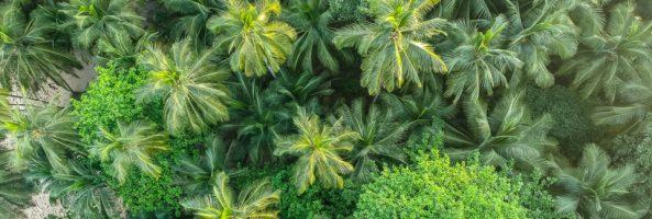 Indústria, agricultura e questões de Saúde Mental  na Ilha do Príncipe