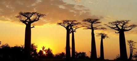 Memórias de Madagáscar