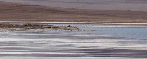 S. Pedro de Atacama – preços e breve descrição dos tours